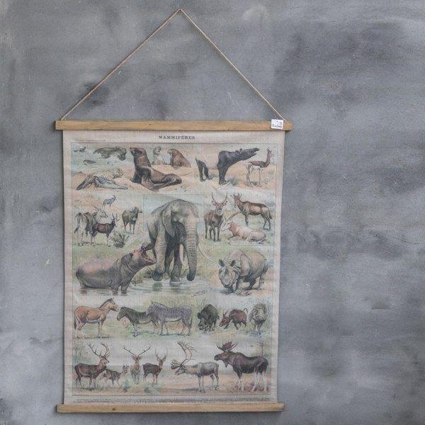 Oude schoolkaart dieren 80 x 100 cm